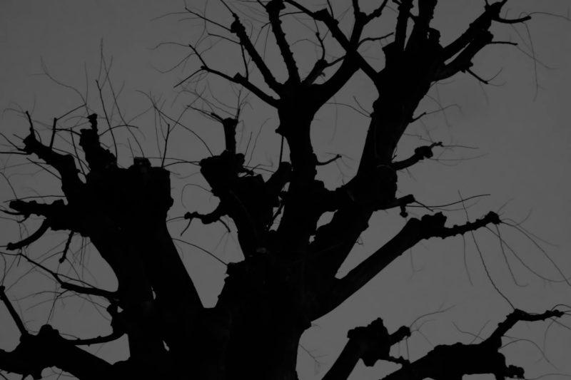 夜の木のイメージ