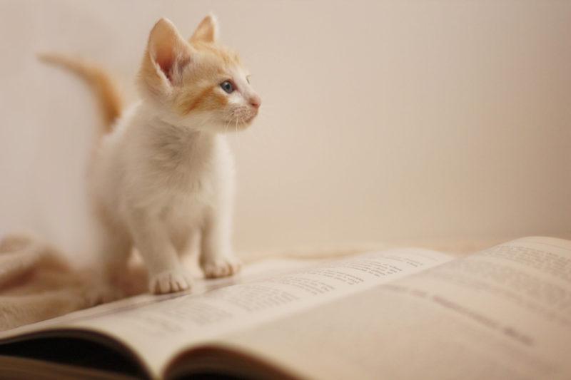 本にのる猫