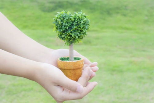 ハート型の木の鉢植え