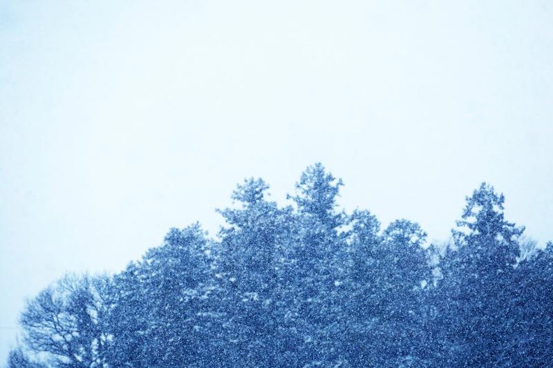 雪のなかの木