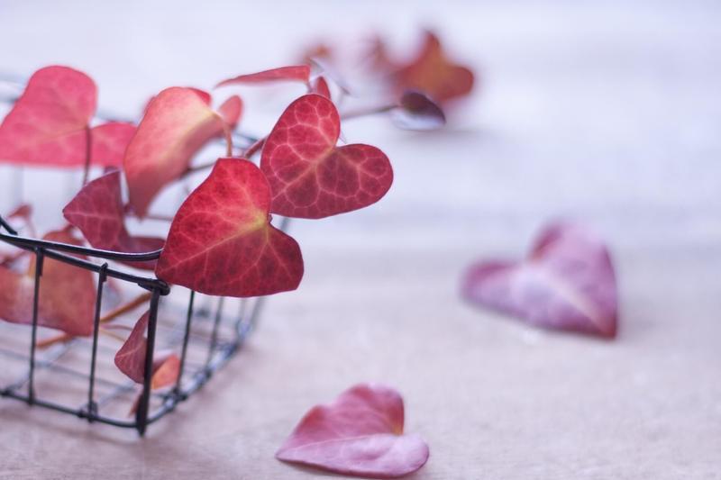 赤い蔦の葉っぱ