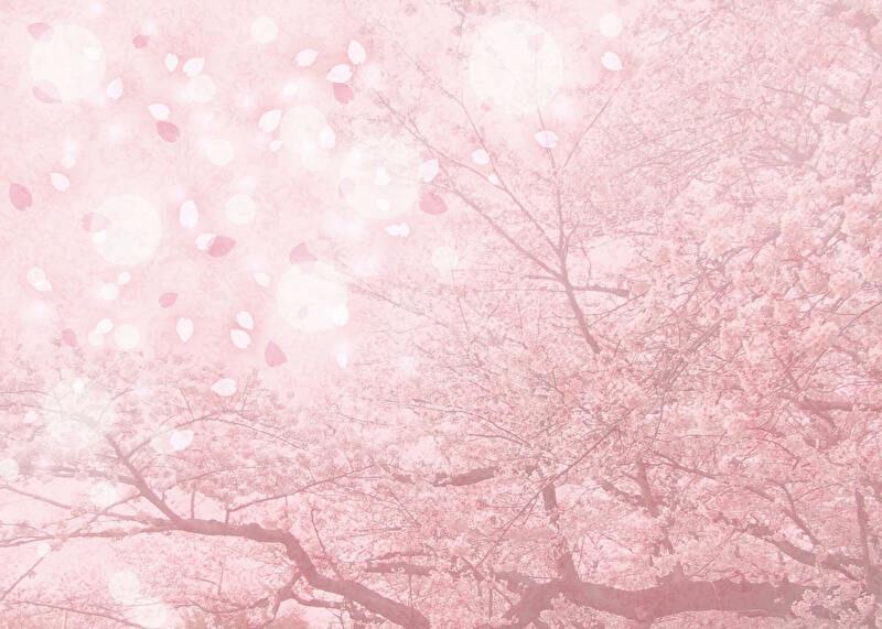 幻想的な桜並木